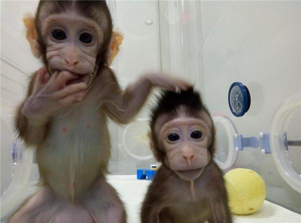 BT丨重大突破!世界首例体细胞克隆猴中国诞生