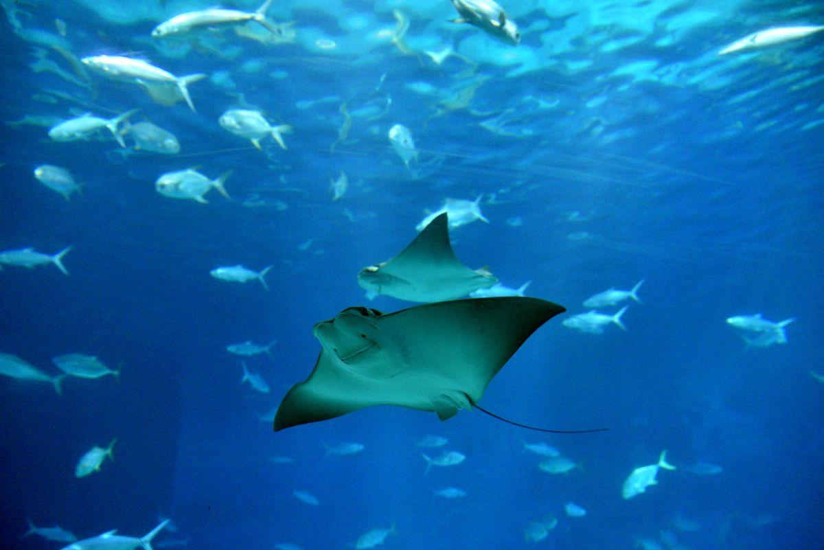 """BT丨研究称海洋无氧""""死区""""面积增三倍 后果严"""
